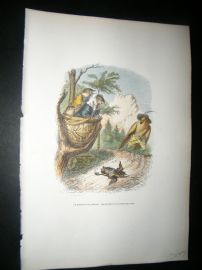Grandville des Animaux 1842 Hand Col Print. Bird Falling From Nest